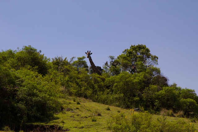 Hello there Mr. Giraffe