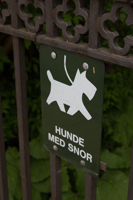 Translation in Dutch: dogs with moustache
