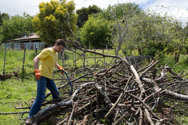 Chopping up wood from the orchard