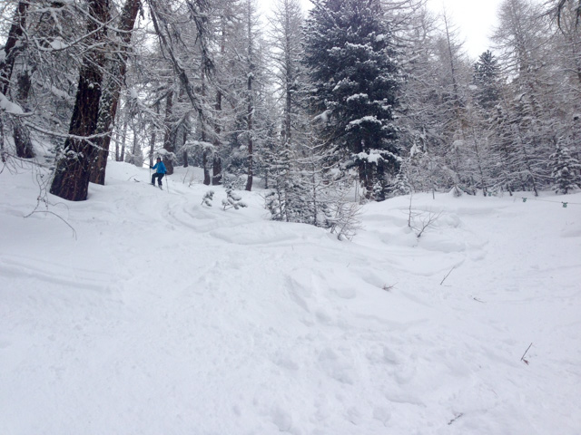 Heading off-piste through the woods